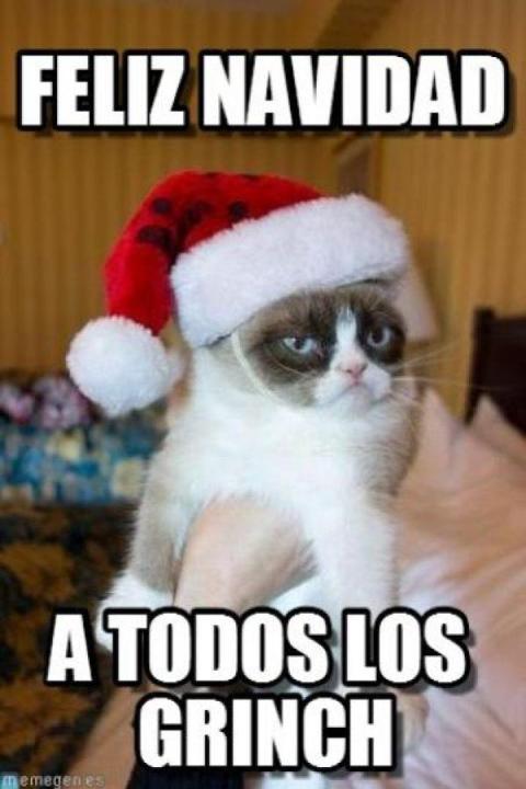 Navidad meme gato