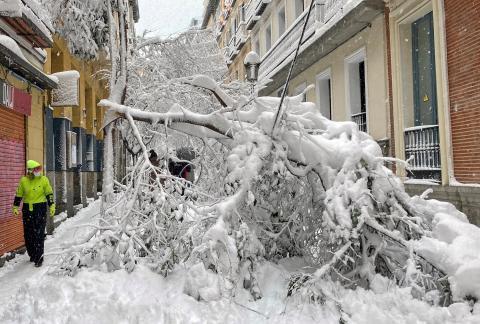 Un árbol caído en una calle de Madrid.