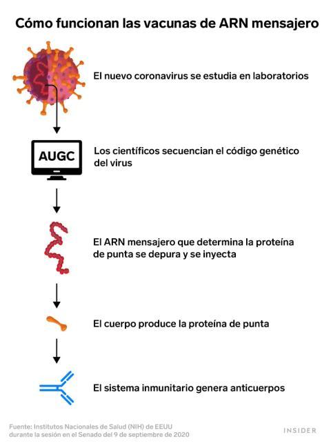 Cómo funciona el ARN Mensajero
