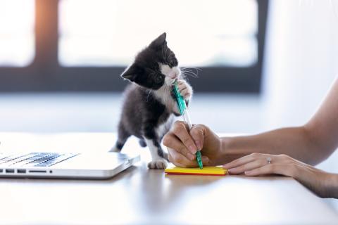 Escribir gato