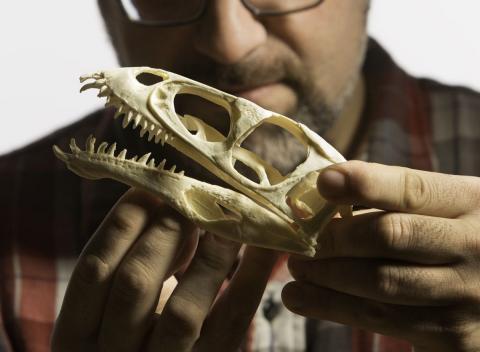 Huesos de dinosurio impresos en 3D