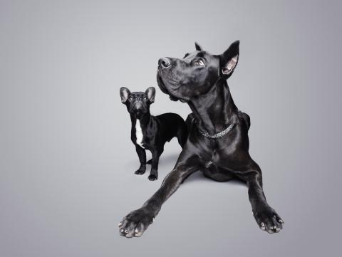 perro gran pequeño
