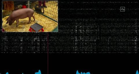El dispositivo Neuralink en el cerebro de Gertrude transmitió datos en vivo durante la demostración mientras ella husmeaba.