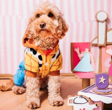 Colección de ropa canina Primark
