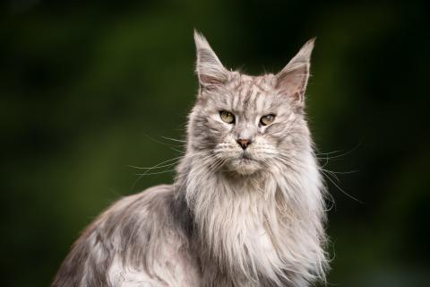 Edad gatos