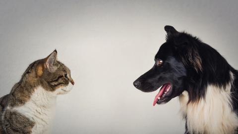 Gatos vs perros