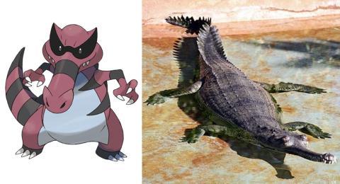 Krookodile es un gavial del Ganges