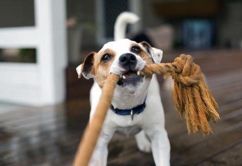 perro cuerda