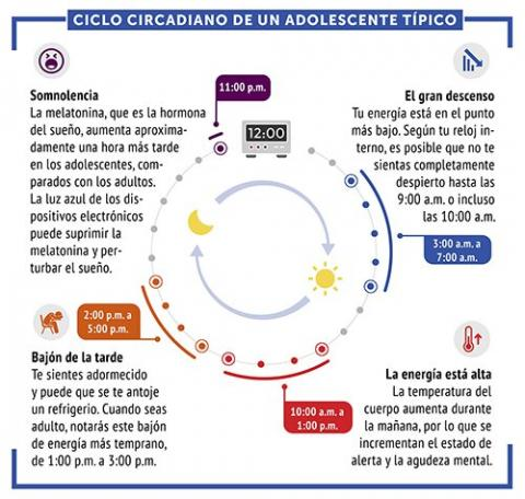 Imagen de lo que sería el ciclo circadiano de un adolescente típico.