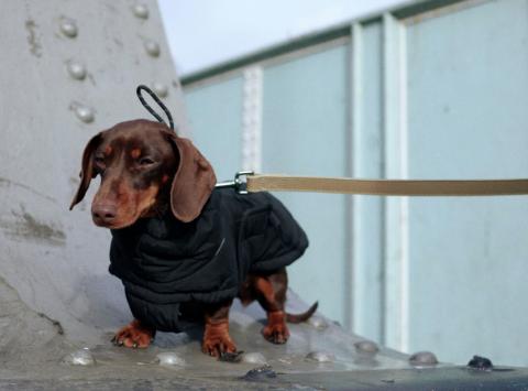 Ropa canina de Zara