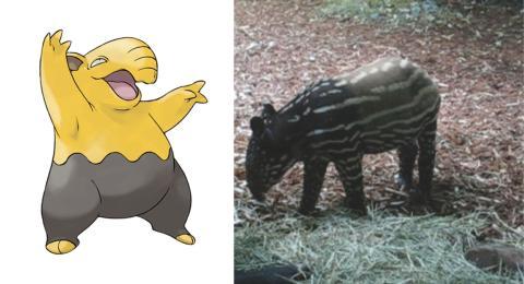 tapires malayos