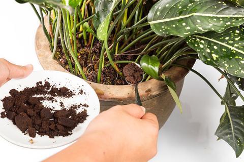 Cafe fertilizante