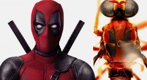 Deadpool Insecto