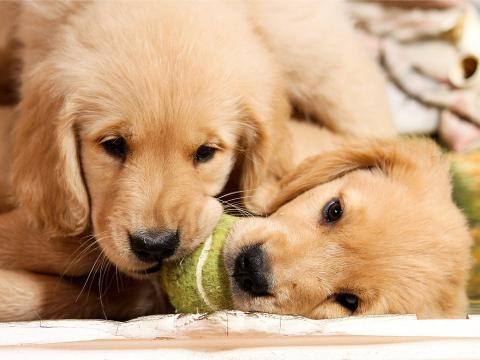 Los cachorros deben interactuar con personas y otros perros.