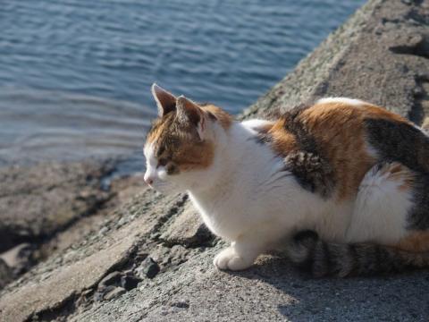Así es la Isla de los gatos, en Japón