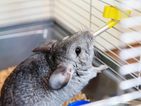 Investiga antes de adoptar cualquier mascota, grande o pequeña.