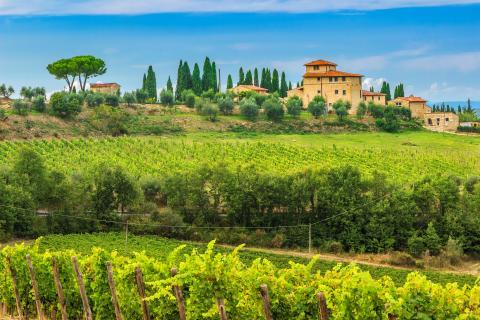 Imagen de los viñeros de Chianti en la Toscana.