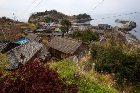 Así es la vida en la Isla de los gatos, en Japón