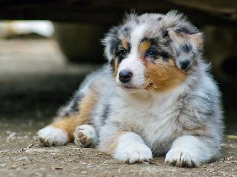 Los perros son sensibles a algo más que al sonido de los fuegos artificiales.