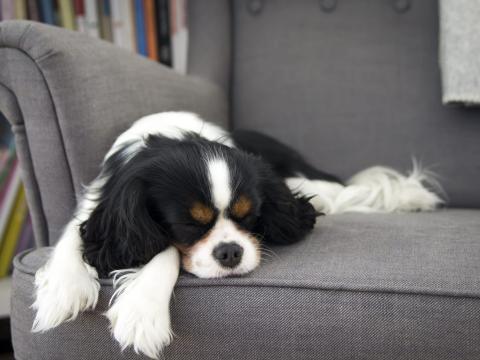 Sin embargo, es importante prestarle atención a tu cachorro cuando esté jugando.