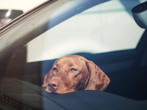 Cuando conduzcas con tu amigo peludo, asegúrate de mantener bajo el volumen de la radio de tu coche.