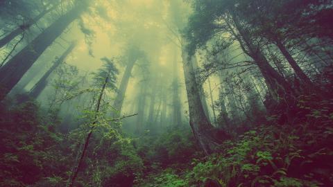Misterio niebla bosque