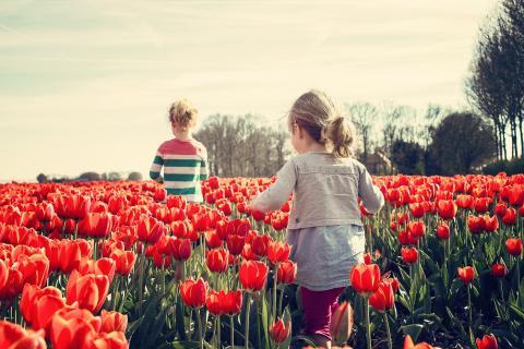 Un niño y una niña pasean entre tulipanes (Pixabay)