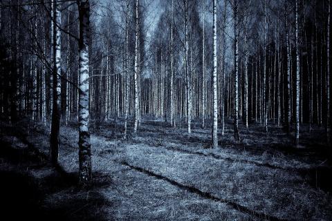 Paranormal bosque misterio