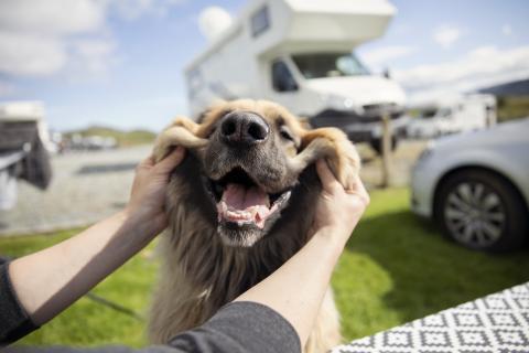 Perro mascota autocaravana