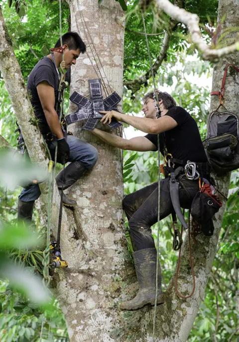 White y su equipo colocando 'The Guardian' en un árbol.