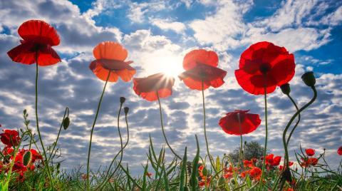 Buen día optimismo flores jardines