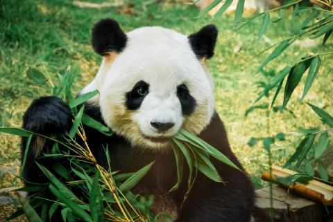 Ahora existen toallas de fibra de bambú que son mejores para el medio ambiente.