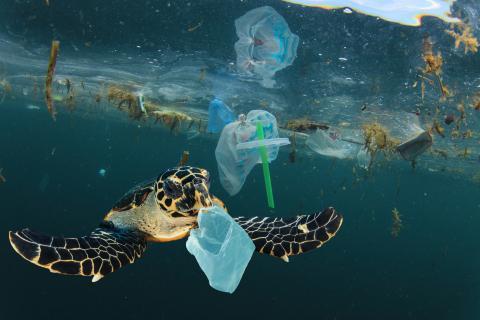 tortuga rodeada de basura