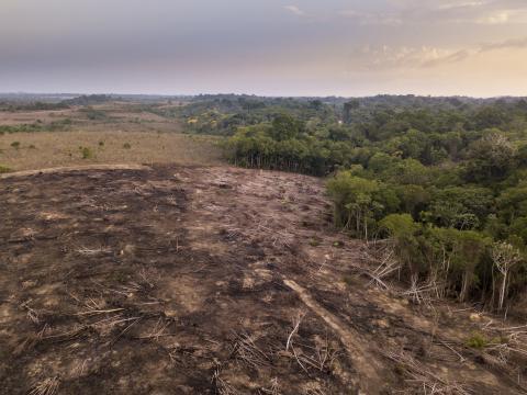 Vista aérea de drones de la deforestación en la selva amazónica en Brasil.