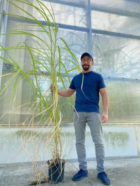 El investigador Ayman Eid sostiene caña de azúcar editada en CRISPR, con hojas de colores más claros.