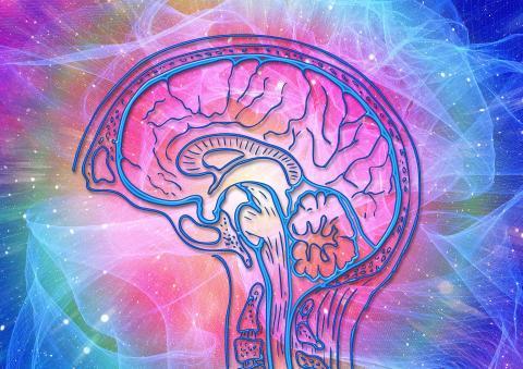 Cerebro cognición