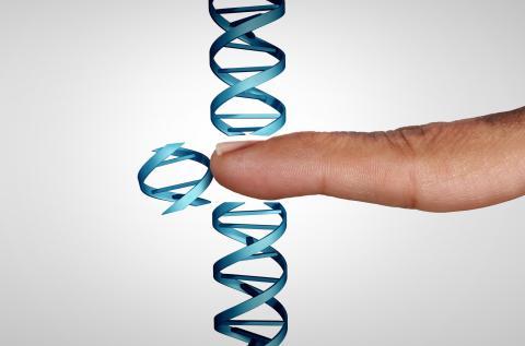 Para el ternero clonado se empleó la edición genética con técnica CRISPR.