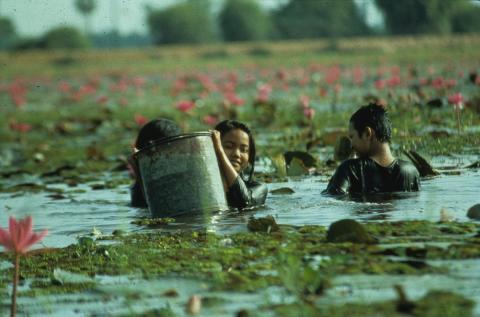 'La gente del arrozal'.