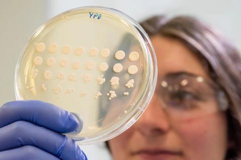 Científicos han desarrollado cepas de levadura y un proceso de fermentación que les permite imitar la estructura molecular de las grasas animales.