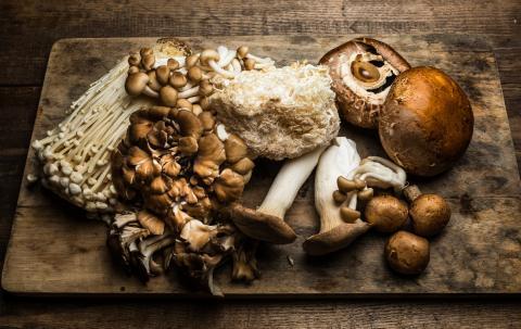 Solamente se conocen un 10% de los hongos de nuestro planeta.