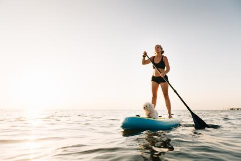 perro paddle surf