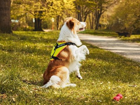 Arnés reflectante para perros