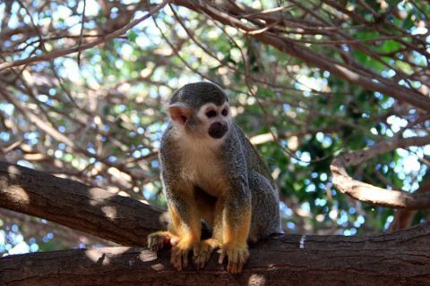 Monkey Park, Tenerife.