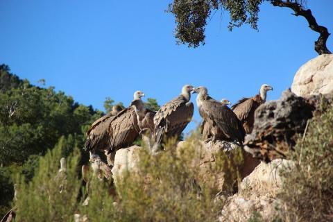 Observatorio de aves Mas de Bunyol, Teruel.