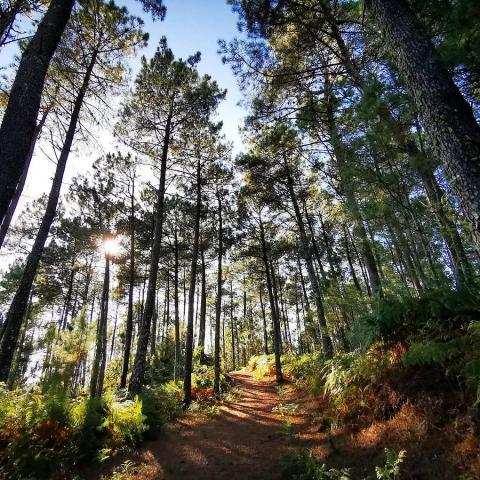 Parque Natural Monte Aloia, Pontevedra.