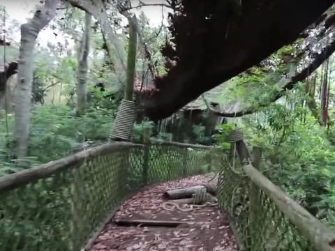 Un puente de Discovery Island.