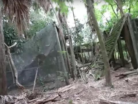 Más restos de Discovery Island.