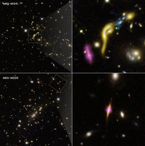 Imágenes compuestas por Hubble y ALMA que muestran 2 de estas galaxias, con puntos resltados donde la formación de estrellas ha cesado por el agotamiento del hidrógeno.
