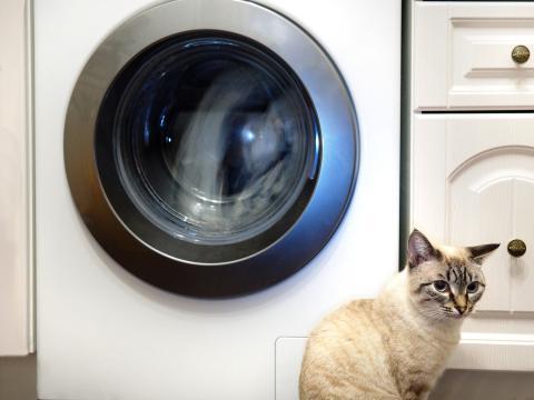 Lavadora y gato