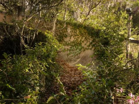 Más del tobogán de agua en River Country, cubierto de follaje.